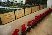 中国铁建领秀城沙盘图