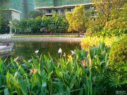 恒大御湖城实景图