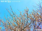 碧桂园润杨溪谷外景图