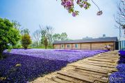 名门紫园实景图