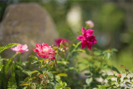 碧桂园珑尚花园