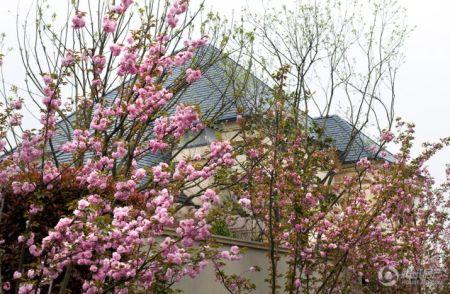 香溪玫瑰园