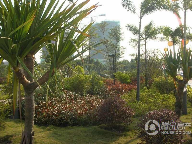 誉江华府园林景观(2010.10.31)